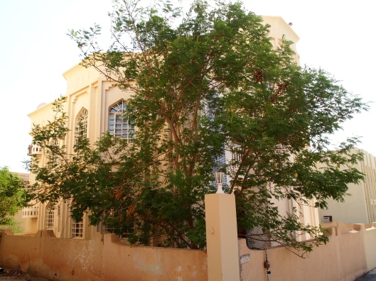 the view of the villa from the uphill corner ~ I have a tree in Oman:-)
