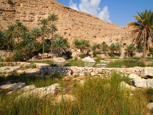 the big green pool at the wide opening to Wadi Bani Khalid