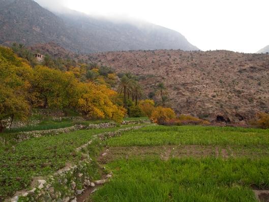 the plantations at Wekan