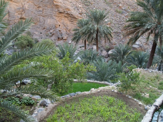 the terraced plantations of Al Far in Wadi Tanuf
