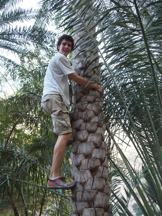 Adam climbs a date palm