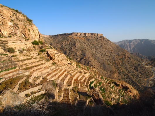 terraces on the mountainside