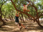 swingin' in the trees at wadi darba, Salalah, Omant
