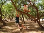swingin' in the trees at wadi darba, Salalah, Omant