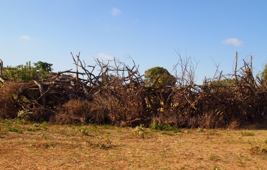 strange fencing around someone's home ~ discovered on our fruitless search for the Baobab forest