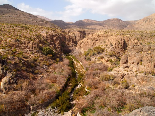 the view of wadi bani habib and up to juniper trees