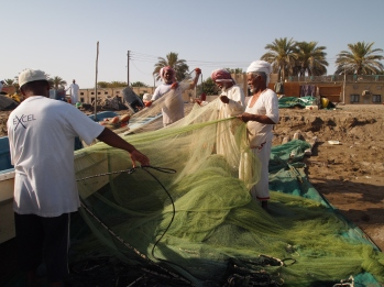 the fisherman haul in the nets, Al Musanah, Oman