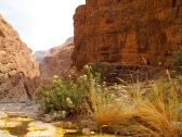 """""""Come forth into the light of things, let nature be your teacher.""""~ William Wordsworth (Wadi Muyadin, Oman)"""