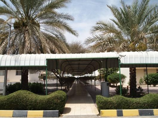 Dave S Esl Cafe Saudi Arabia Forum