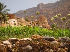 onions in Balad Sayt, Oman