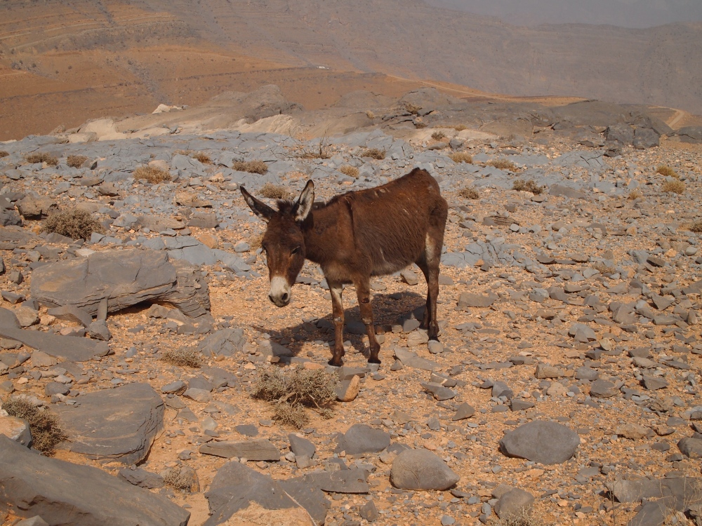 the road to jebel harim: petroglyphs, mountain views & graveyards (1/6)