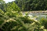 a river in Ohiopyle, Pennsylvania