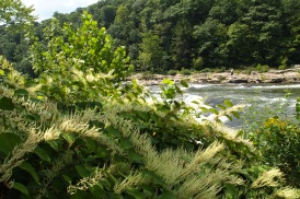 a river in Ohiopyle, Pennsylvania