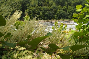 Ohiopyle, Pennsylvania, USA