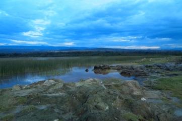 marsh at Lake Langano, Ethiopia