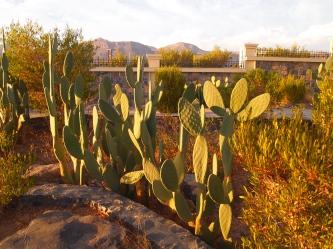 cactus at Sahab