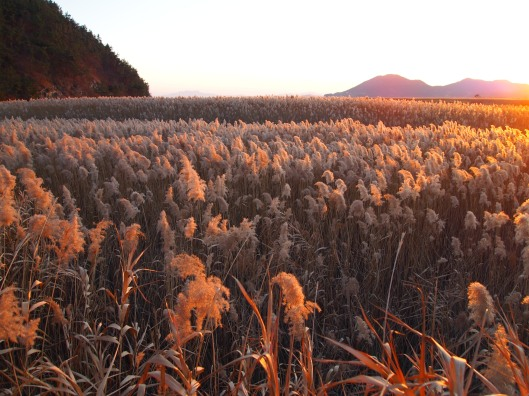 Suncheon Bay Ecological Park