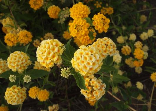 miniature little flower balls