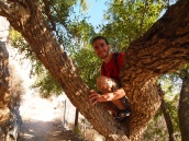 Alex in a tree