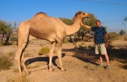 Mike befriends a camel