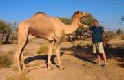 Mike befriends a camel