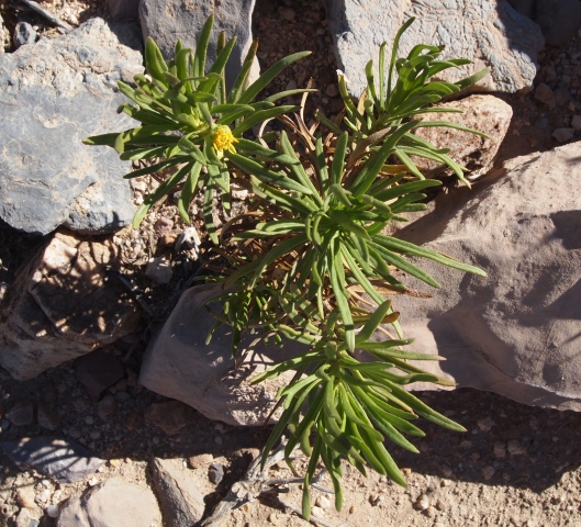 flowers can sprout up anywhere in the desert