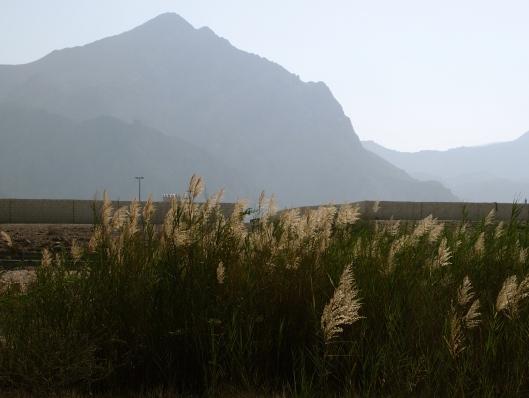 pretty grasses all in a row