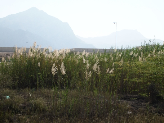 and more glowing grasses