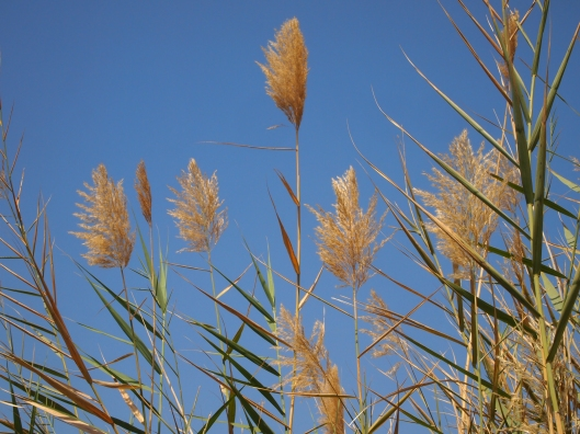 grasses and blue (read HOT) sky