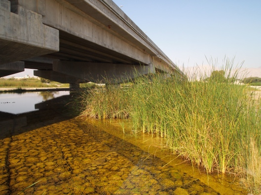 wetlands and the other side of the bridge