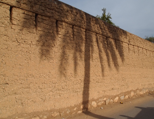 the exterior wall with date palms shadows