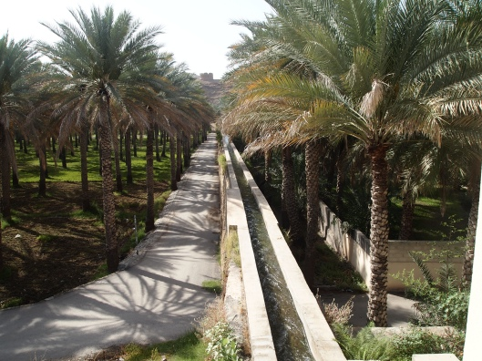 shadows of date palms next to the large falaj at Birkat al Mouz