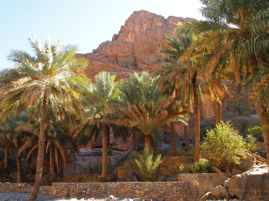 terraces of date palms inside Wadi An Nakhur