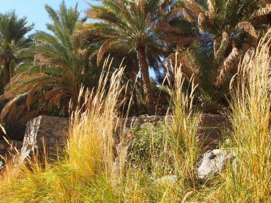 golden grasses and terraces of date palms