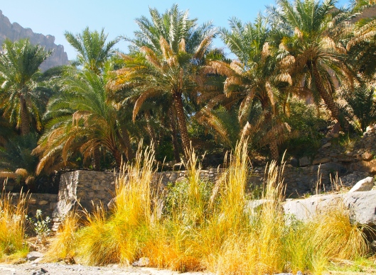 golden grasses and date palms