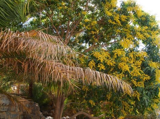 textures in Oman's wadis