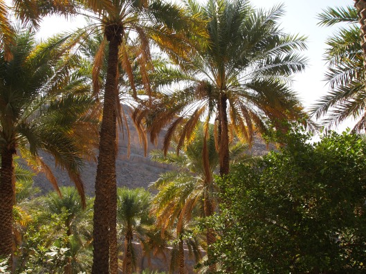 the view from the shade of the date palms