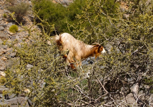 a silly goat in another tree