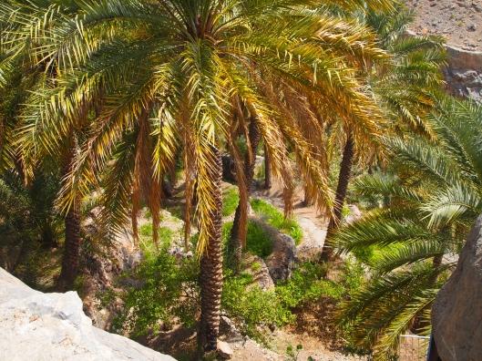 returning to the village of Misfat Al Abriyyin
