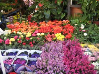 the flower market in Istanbul, Turkey