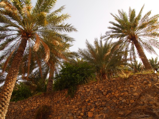 terraces with date palms in Al Alya