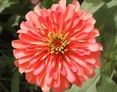 Flowers on the University of Nizwa campus