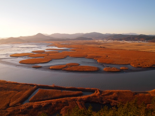 Suncheon Bay Ecological Park in South Korea