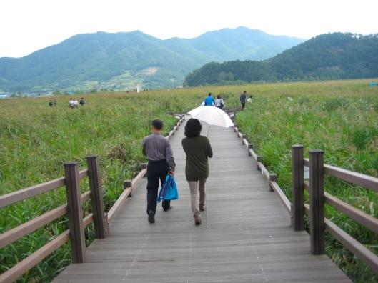 path through Suncheon Bay Ecological Park in South Korea