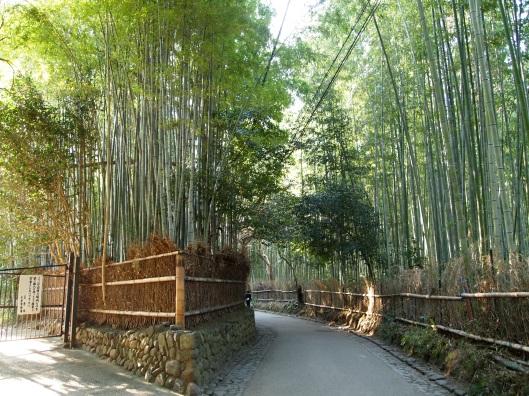Path of Bamboo in Arashiyama, near Kyoto, Japan