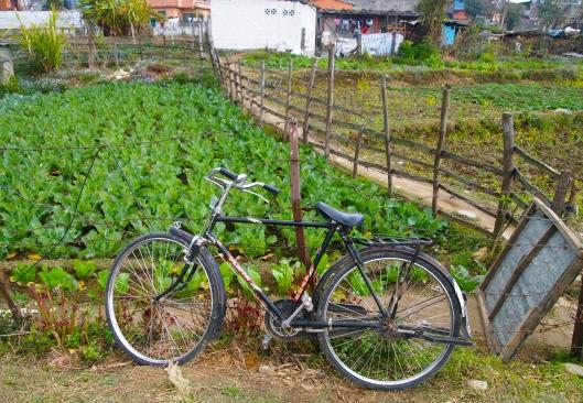 a pathway along a farmer's field in Pokhara, Nepal