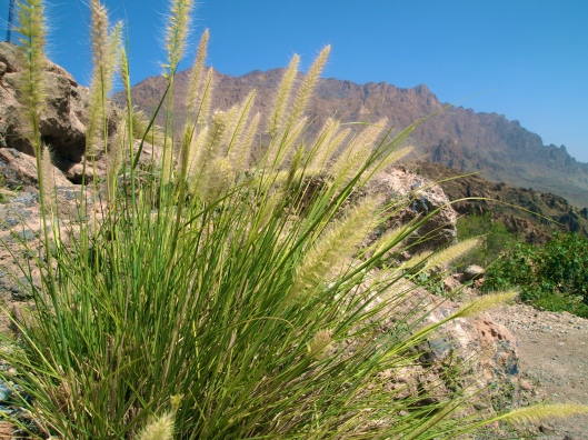 some pretty grasses near the entrance to Wekan