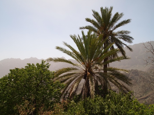 looking across the wadi to the mountains on the other side