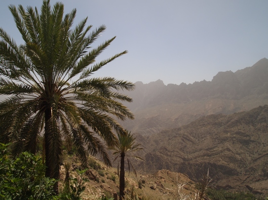 date palm and the Western Hajar Mountains