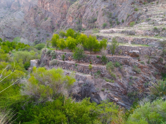 terraces with pomegranate trees